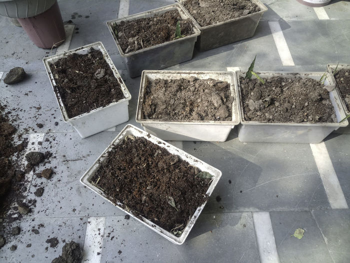 Plastic planters filled with a potting mix to be a part of an organic kitchen garden. These are rectangular white plastic pots, containing a potting mix that contains dried cowdung, soil, bone meal, home made compost and cocopeat. At the bottom of this planter is leaves and other residue from previously grown plants. Kitchen Garden Making Potting Mix Organic Garden Organic Gardening Organic Growing Planter Planters Plastic Planters Plastic Pots Potting Mix Preparing Potting Mix Preparing Soil