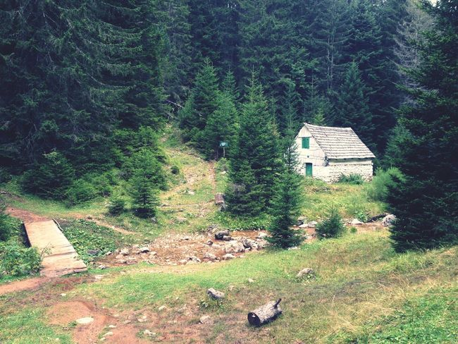 Montenegro Cabin Cabin In The Woods Summer Summertime Nature Nature Photography Scenery Forest Creek Creekside Trail