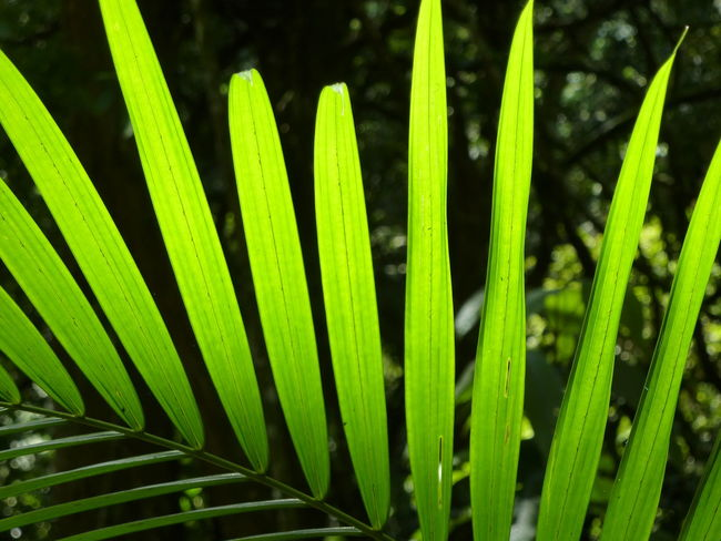 Beauty In Nature Close-up Green Color Green Colors Green Green Green!  Green Leaves Outdoors Plant Tijuca's Forest Perspectives On Nature