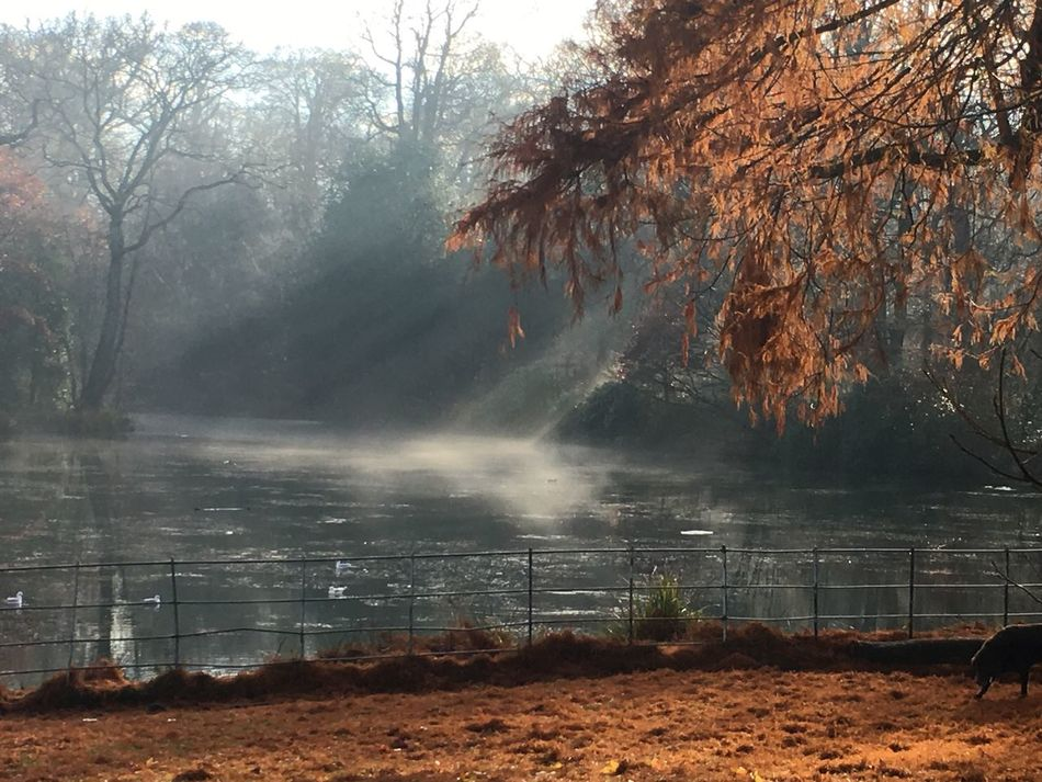 Autumn Beauty In Nature Day Fog Hampstead Heath Lake Landscape Leaves🌿 Nature No People Outdoors Red Scenics Tranquility Tree Water Winter