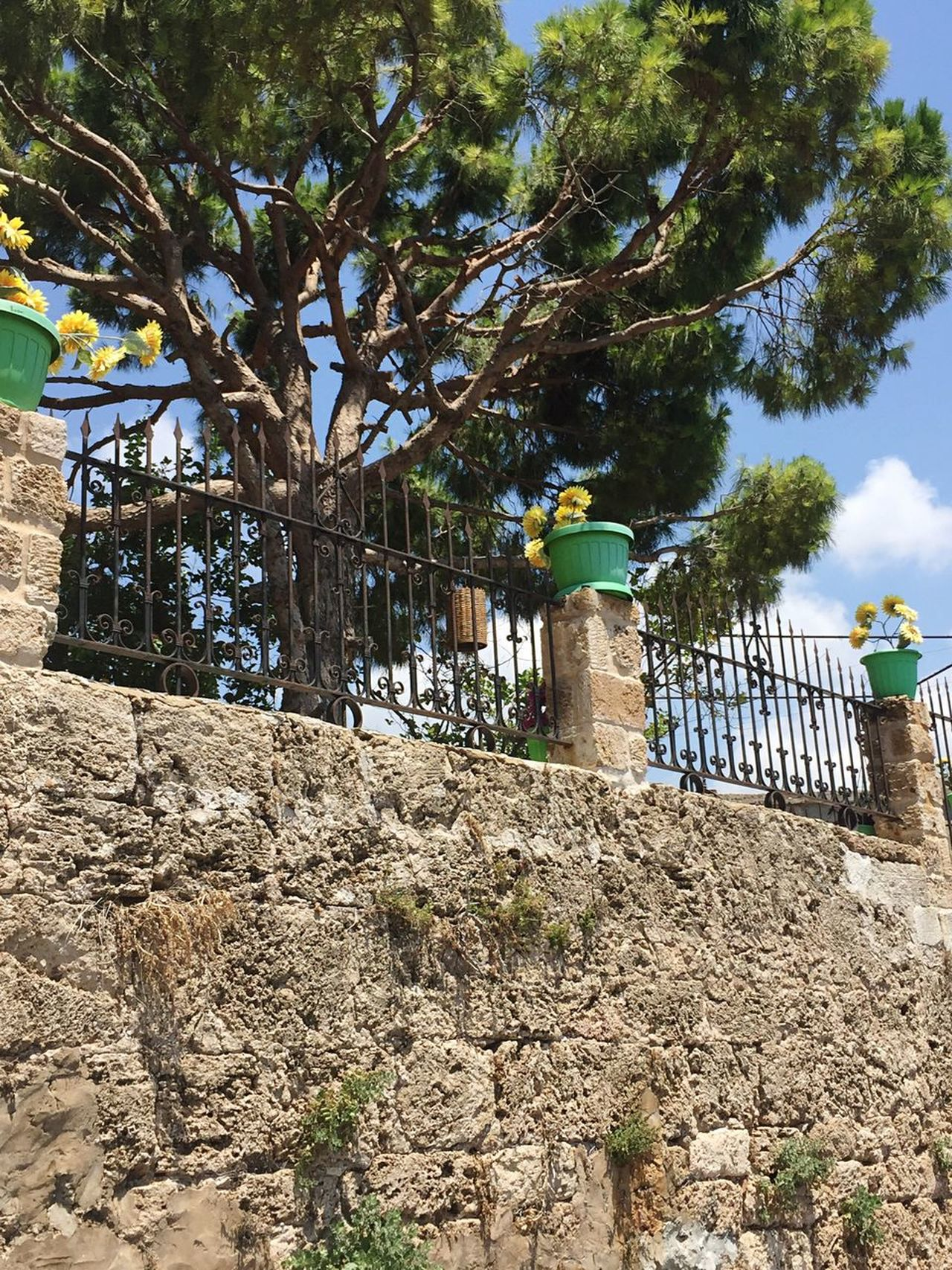 Stone Wall Hidden Places Wrought Iron Pine Tree East Mediterranean Railing Flower Pots Yellow Flowers Tree Day Outdoors No People Built Structure Architecture Sky Nature Ancient Civilization Summer ☀ Byblos Lebanon