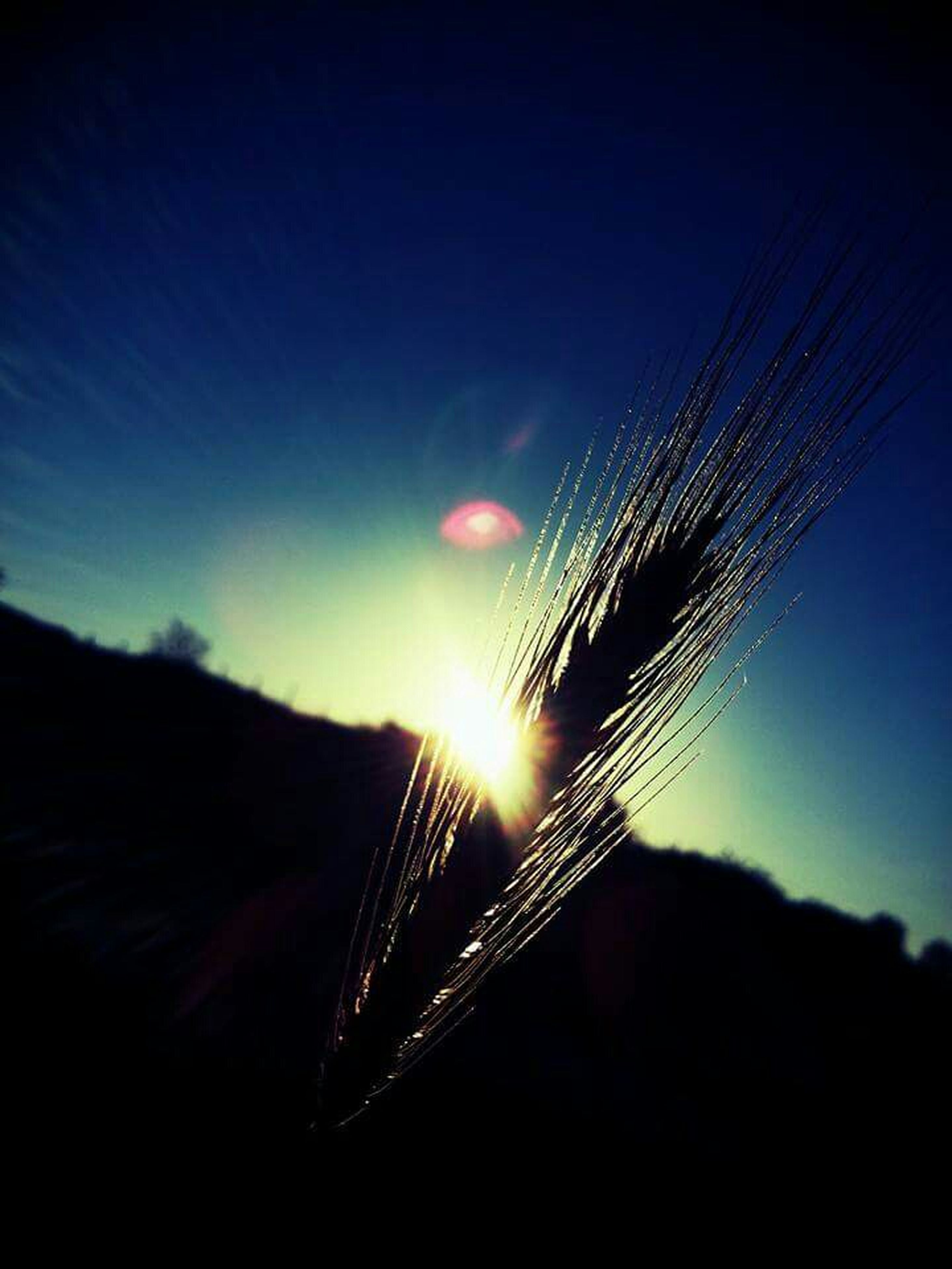 silhouette, sun, sky, low angle view, clear sky, sunset, close-up, nature, beauty in nature, lens flare, focus on foreground, outdoors, copy space, no people, spider web, sunlight, fragility, night, tranquility, plant