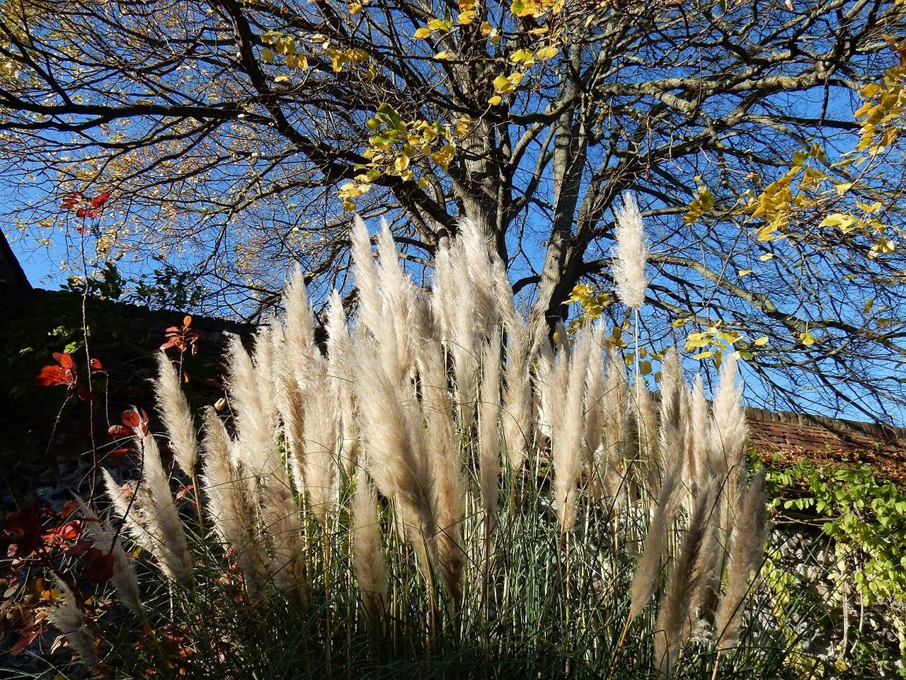 tree, branch, nature, growth, flower, beauty in nature, outdoors, day, no people, bare tree, autumn, clear sky, grass, sky