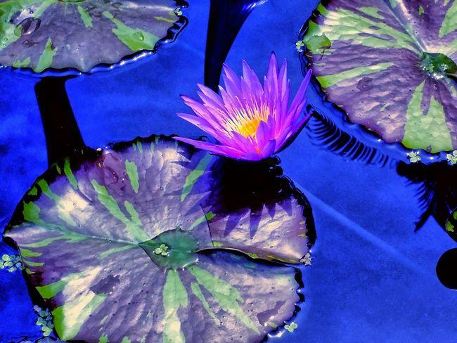 Relaxing Relaxing Flowers Free Flowers Macro Macro_captures Macro_collection Macro Nature EyeEm Macro Macro Photography Macrophotography . Fairchild Tropical &Botanic Garden. Miami, Fl.