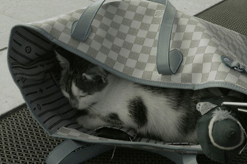 Capture The Moment Cat In The Bag Leading Lines Funny Animal_collection Animal Photography Animal Portrait Share Your Adventure