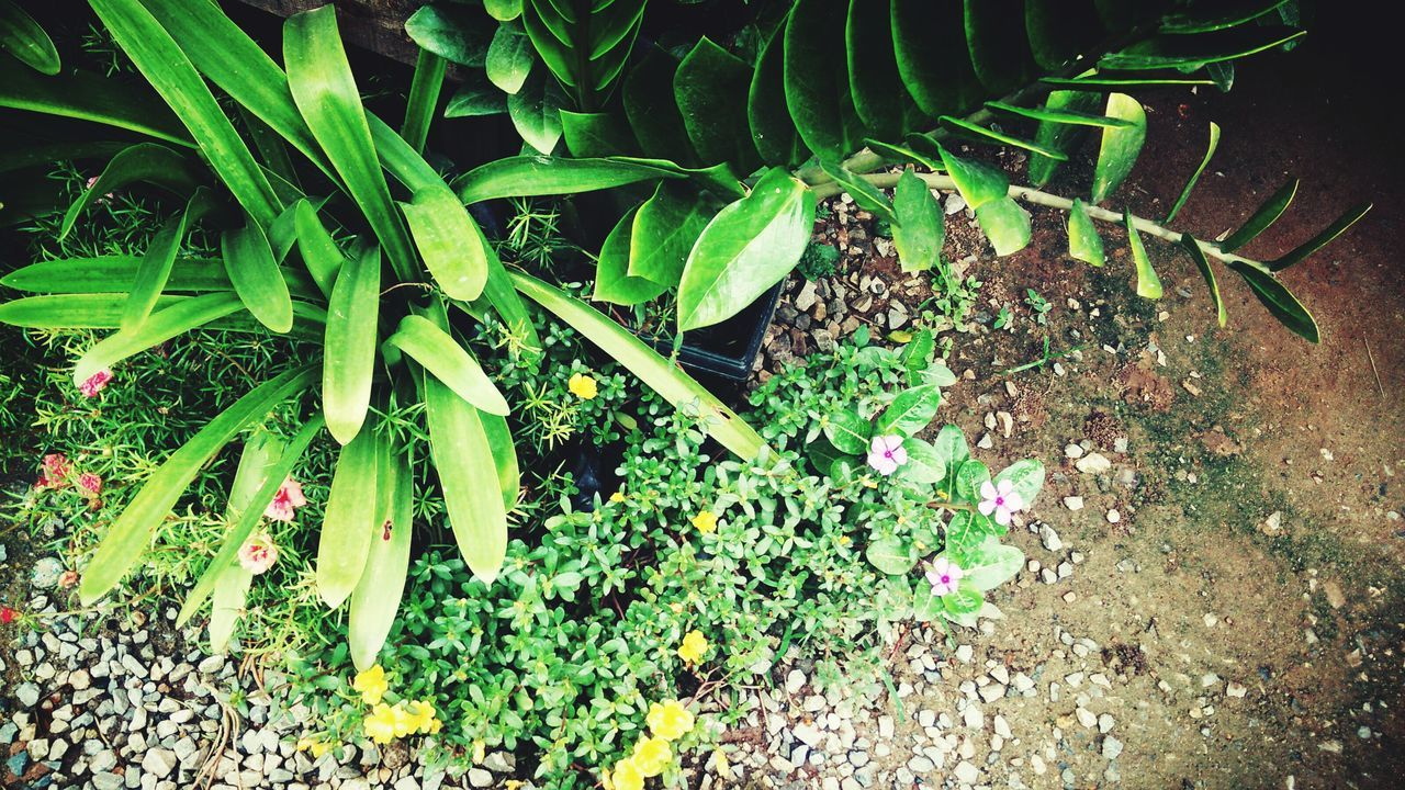 growth, plant, nature, green color, leaf, no people, outdoors, day, beauty in nature, grass, freshness, fragility, close-up