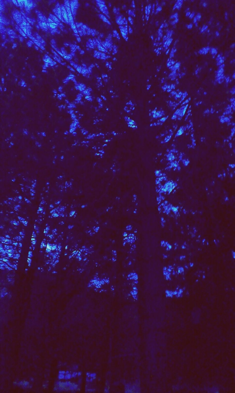 Hiding in trees..