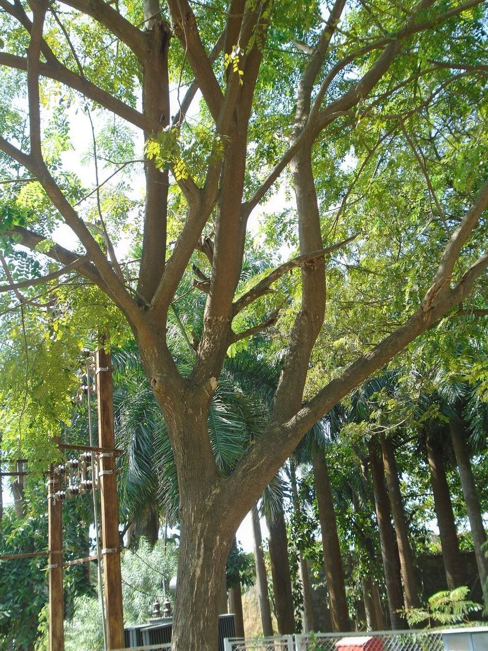What Who Where Tree Lover Love To Click Trees Low Angle View Green Color Built Structure Architecture Growth No People Nature Beauty In Nature Outdoors Day Tree Sony DSCW800 Photohraphers_of_India Nature_perfection Nature Lover