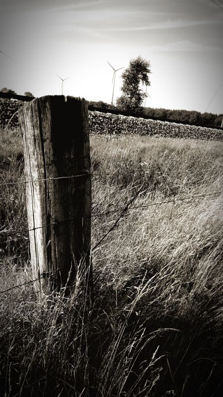 Security Agriculture Barbed Wire Protection Field No People Rural Scene Outdoors Prison Sky Wege Und Strassen Eyeem Market Photography Themes EyeEm Selects Grey Color Black And White Schienen Black And White Schienenstrang