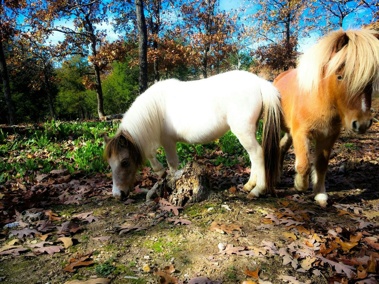 Beautiful stock photos of pony, Animal Themes, Animals In The Wild, Beauty In Nature, Day