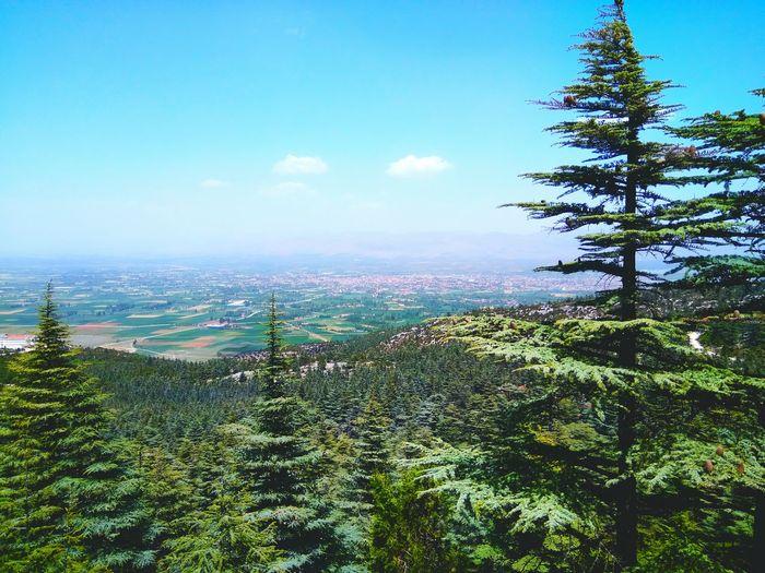 Amateurphotography PhonePhotography Forest Park Naturepark Kızıldağ ısparta Turkey Turkey💕