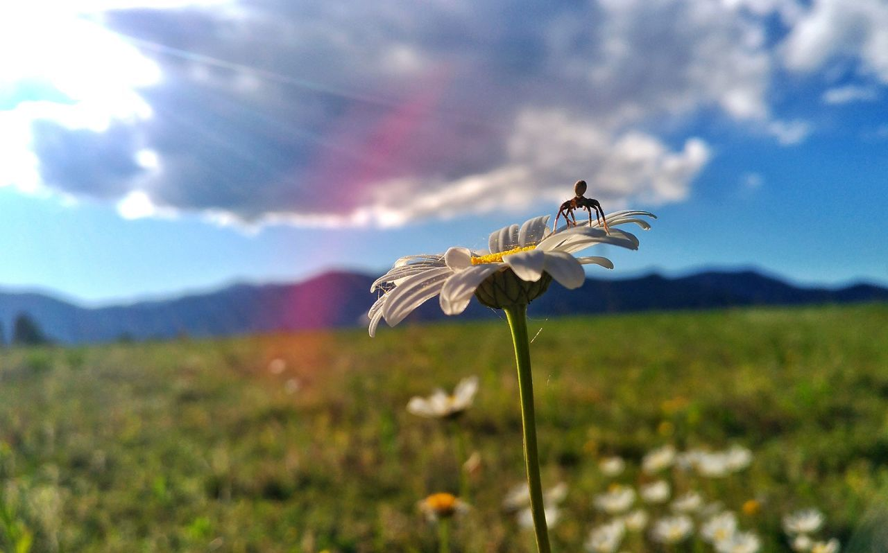 Animal Wildlife Outdoors Spider Web Spider Daisyflower Field Beauty In Nature Afternoon Piedmont Italy Flower Sunlight Sky Springtime Insect Photo Insect Photography Macro One Animal Flying Animals In The Wild Bird Animal Nature Animal Themes Spread Wings Day No People EyeEmNewHere