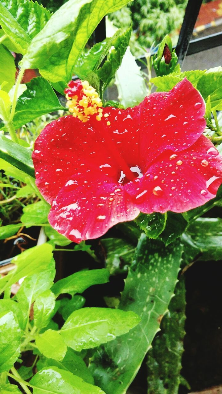 red, growth, drop, nature, beauty in nature, wet, no people, leaf, day, freshness, plant, close-up, outdoors, raindrop, green color, water, fragility, flower