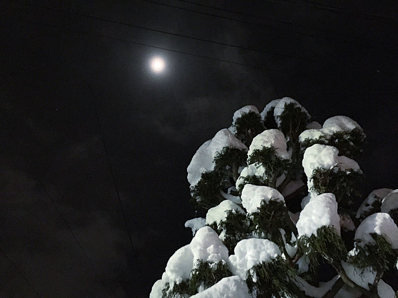 Snow Snow ❄ Snow Trees Snowing Nightphotography Moon