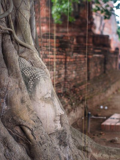 Ayutthaya Historic Park Ayutthaya | Thailand Close-up Day Focus On Foreground Historical Building Historically Yours History