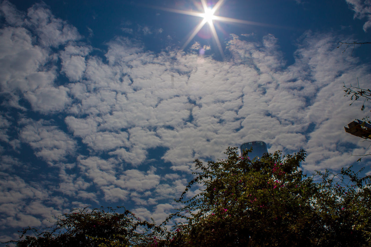 Beauty In Nature Cloud - Sky Cloudy Day Growth Looking Up Low Angle View Nature No People Outdoors Scenics Sky Sun Sun Rays Sunbeam Tranquility Tree Zhuhai