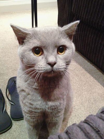 Pets Corner First Eyeem Photo