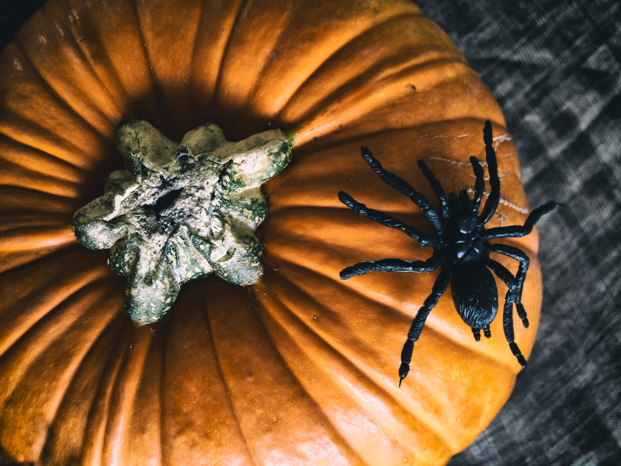 Beautiful stock photos of halloween, Animal Representation, Artificial, Celebration, Cultures