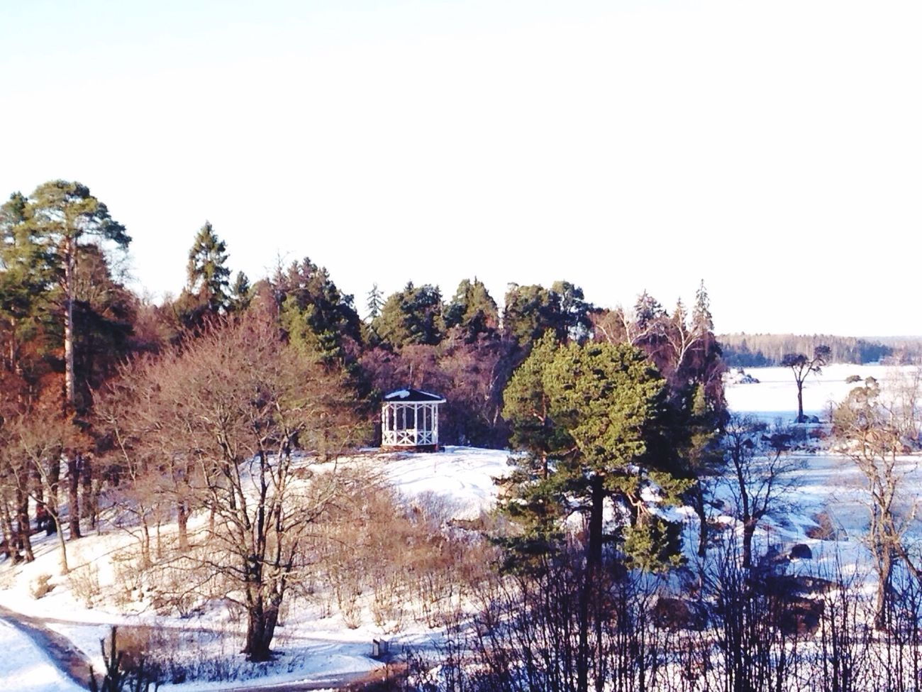 Winter Russia Vyborg Saint Petersburg Gulf Of Finland Nature Nature_collection Park Nature Photography Picturesque Trees Fir Fir Tree Fir Trees Larch Larch Tree Wintertime Winter Trees Mon Repos