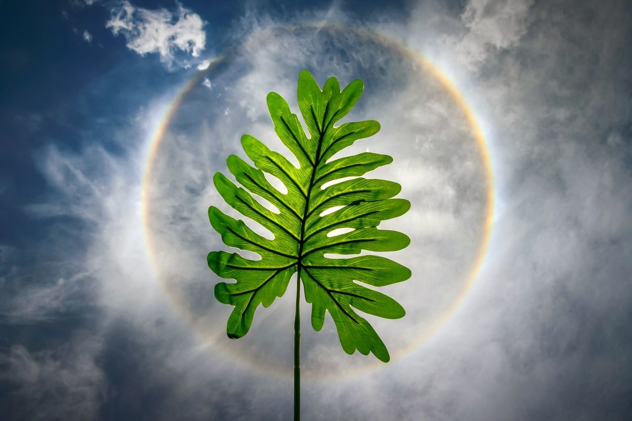 Sky Leaf Nature Green Color No People Beauty In Nature Cloud - Sky Plant Sunhalo Sun Halo Halo Rainbow Leaf Power Conceptual Concept Circle Circular Tree Outdoors Water Close-up Day Freshness Nature EyeEmNewHere