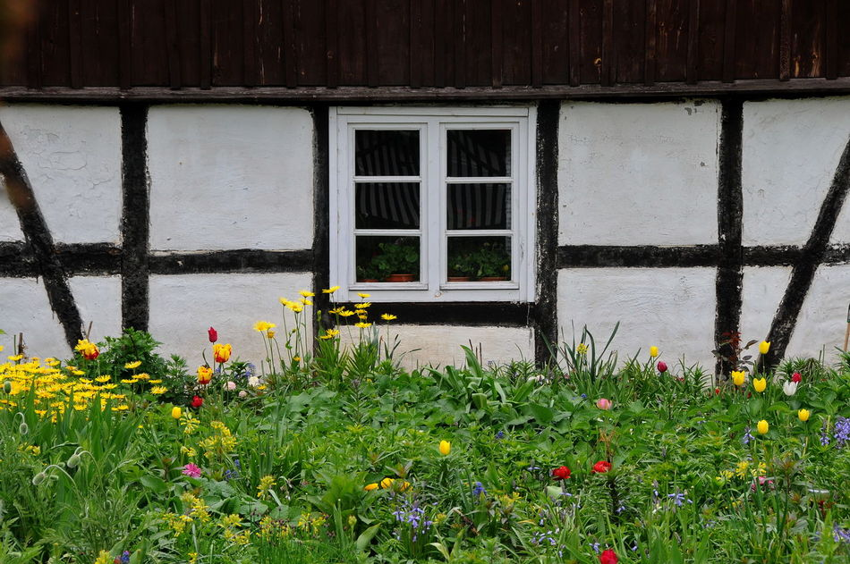 flowers Architecture Beauty In Nature Building Exterior Built Structure Day Flower Freshness Front And Flower Growth House Nature No People Old Farm House Outdoors Plant Sobotka Window Box