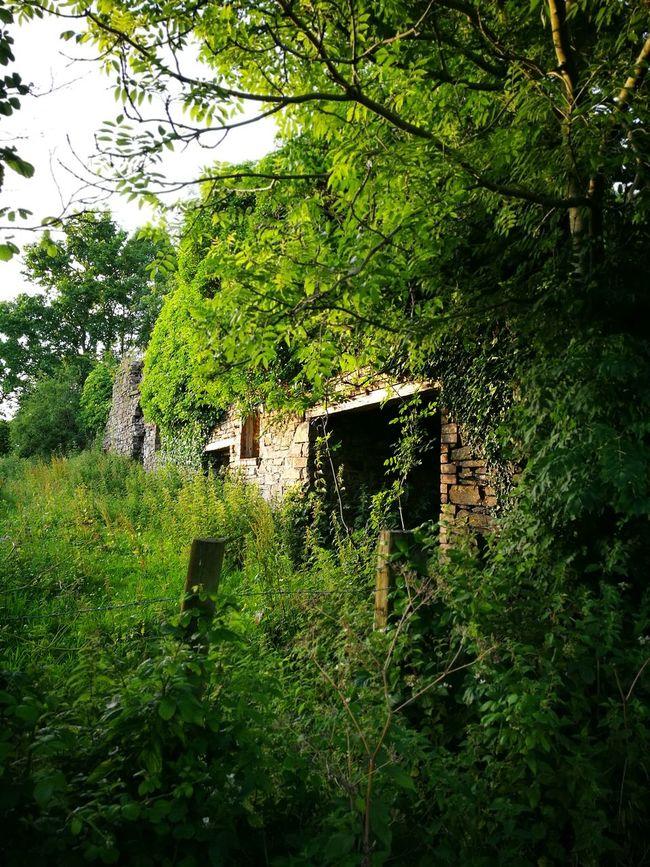 Stonehouse Oldfarmhouse Old Farm Stone Brickstones Bricks And Stones Ruined Building Ruins Architecture Ruinedfarmhouse Oldbarn Abandoned Barn Abandoned Places Abandoned Buildings Old Buildings Oldbarn Old Barn