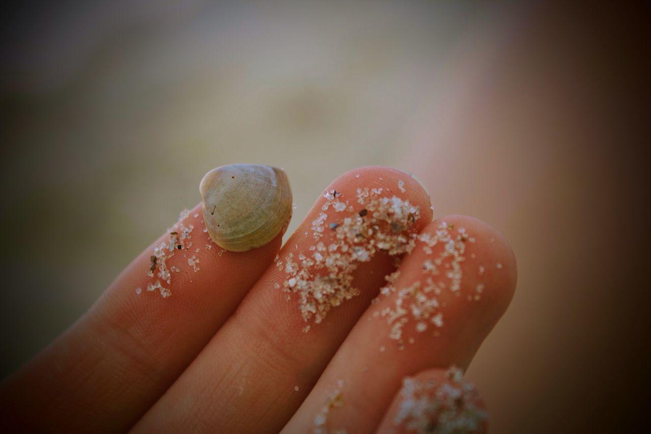Beach Photography Close-up Day Fingernail Human Hand Oceanside Outdoors S Sea