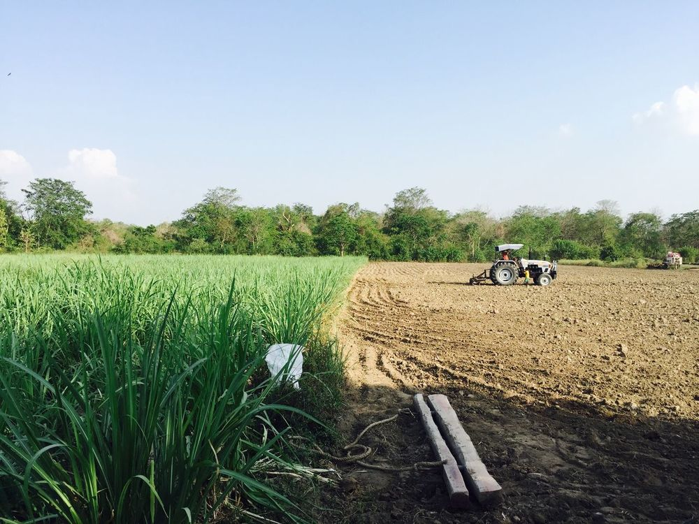 Green /dry Field Agriculture Farm Farmer Crop  Growth Real People Rural Scene Sky Day Outdoors Landscape Men Grass Transportation Nature Tree Working Cereal Plant Two People Place Of Heart