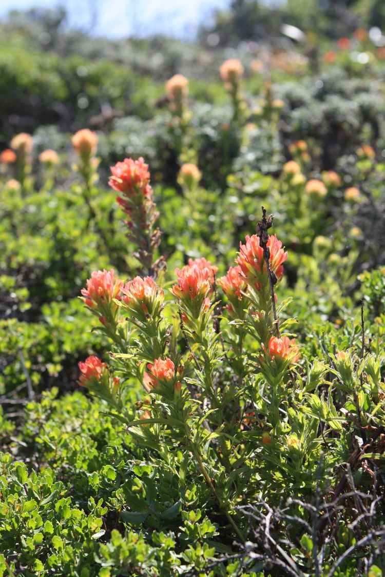 Blooming Botany Flower Flower Head Focus On Foreground Freshness Hiking Nature Petal San Bruno Mountain Trail