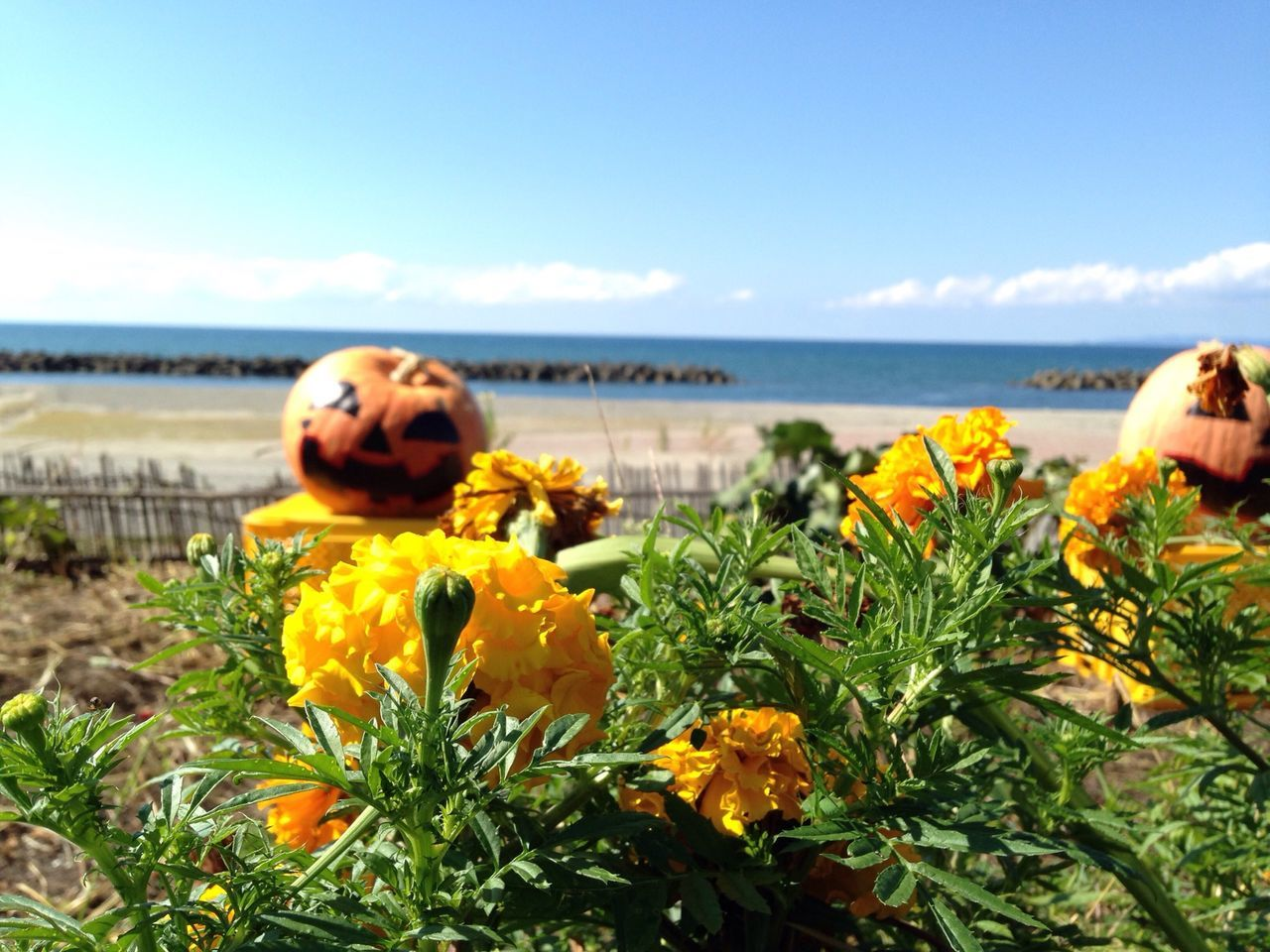 Beautiful stock photos of pumpkin, Beach, Botany, Cloud, Day