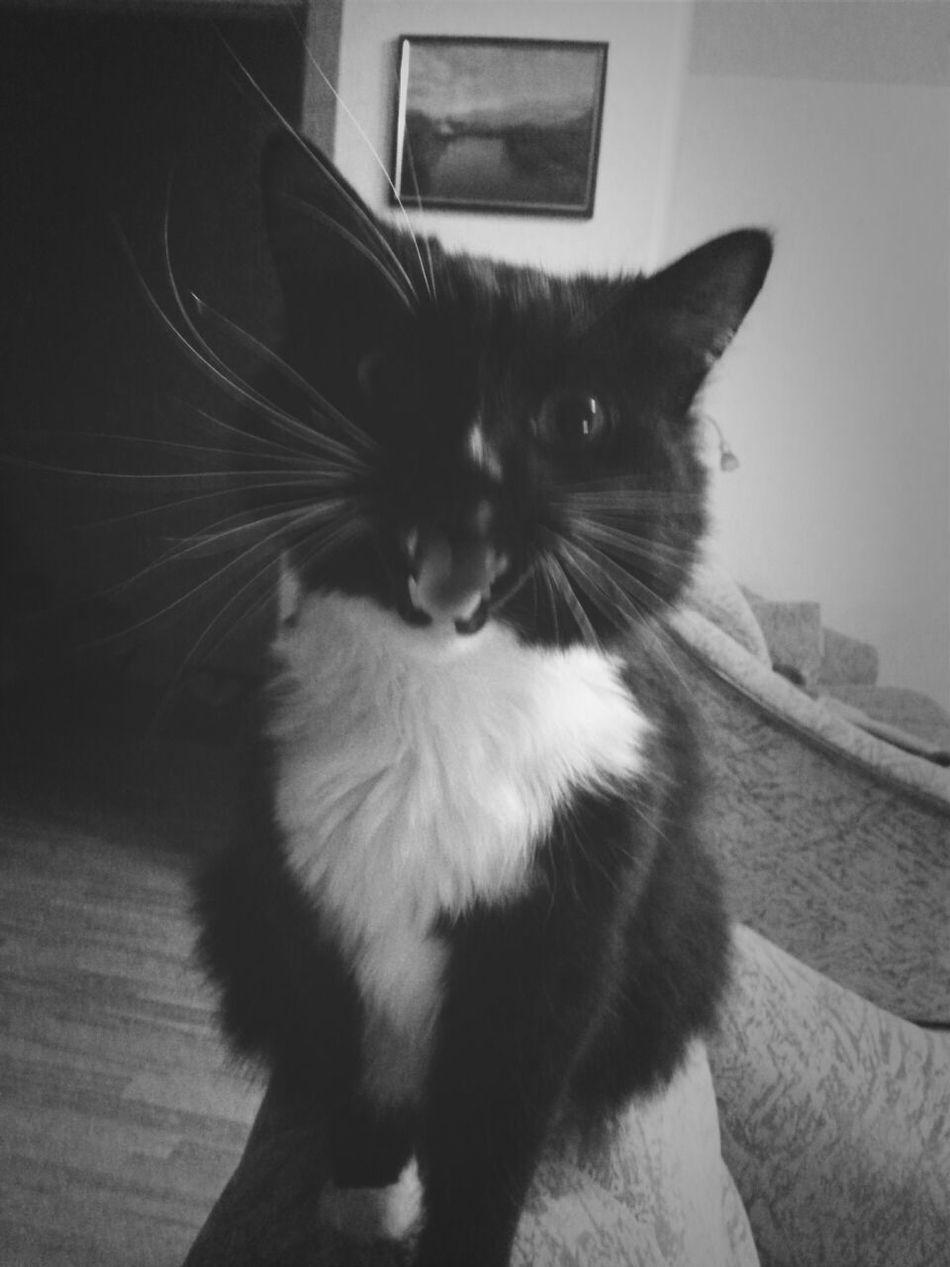 angry :-D Cute Pets Cat Keksas Emotions