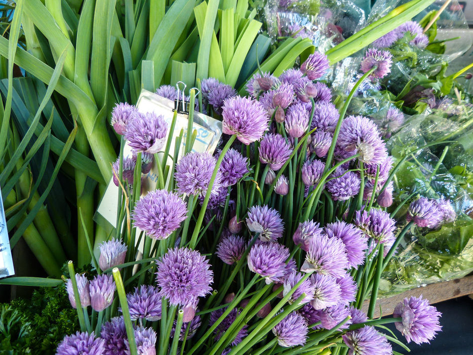 Beauty In Nature Blooming Blossom Bunch Of Flowers Chive Flowers Chives Farm Stand Farmers Market Flower Flower Head Freshness Green Color Growth Healthy Food Local Food Organic Food Petal Plant Purple