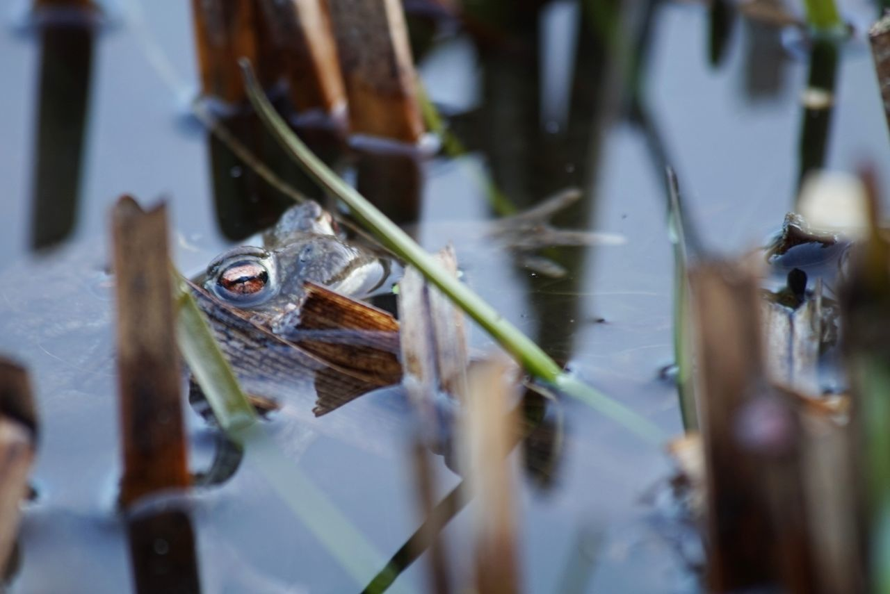 Outdoors Nature Water Frog Frogs Frog Eyes Frog Perspective Frogeye Water_collection Water Nature No People Eeyem Photography Eeyem Lake Natural Beauty Nature_collection Beauty In Nature