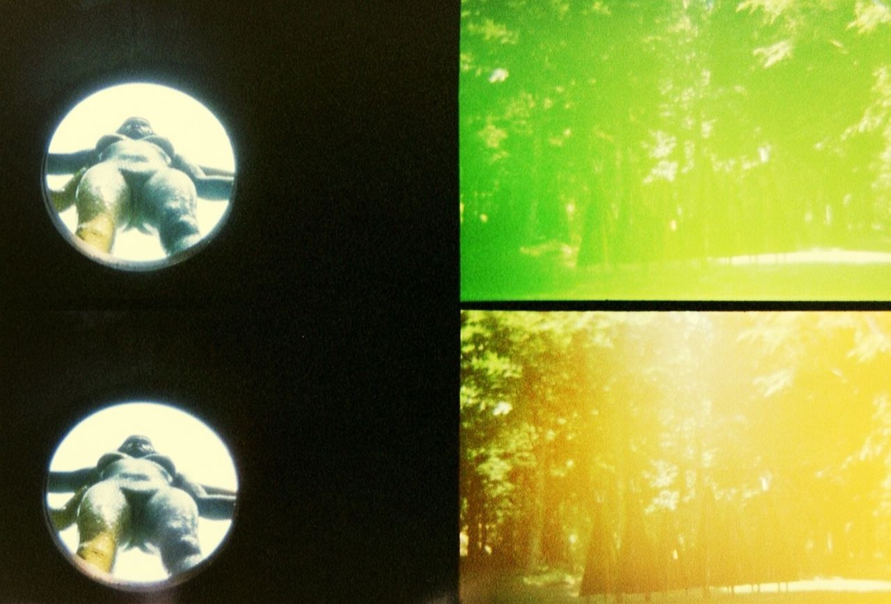 no people, close-up, indoors, illuminated, day, nature