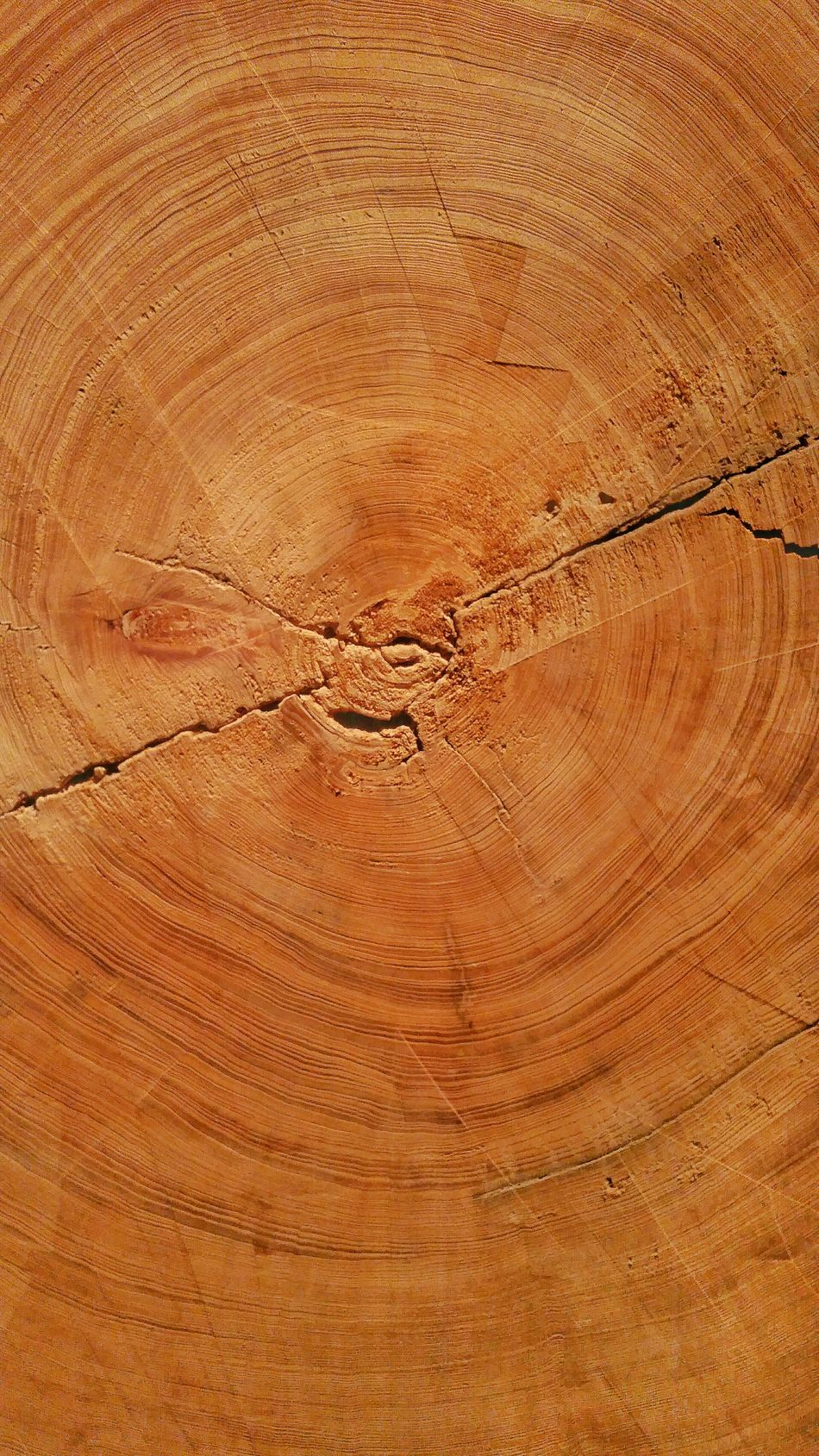 Wood Trees Of Eyeem Tree Cut In Half Cypress Tree 600 Plus Year Old Tree Rings Of A Tree Tree Rings Very Old Tree 1,100 A.D. Never Rots Showcase April