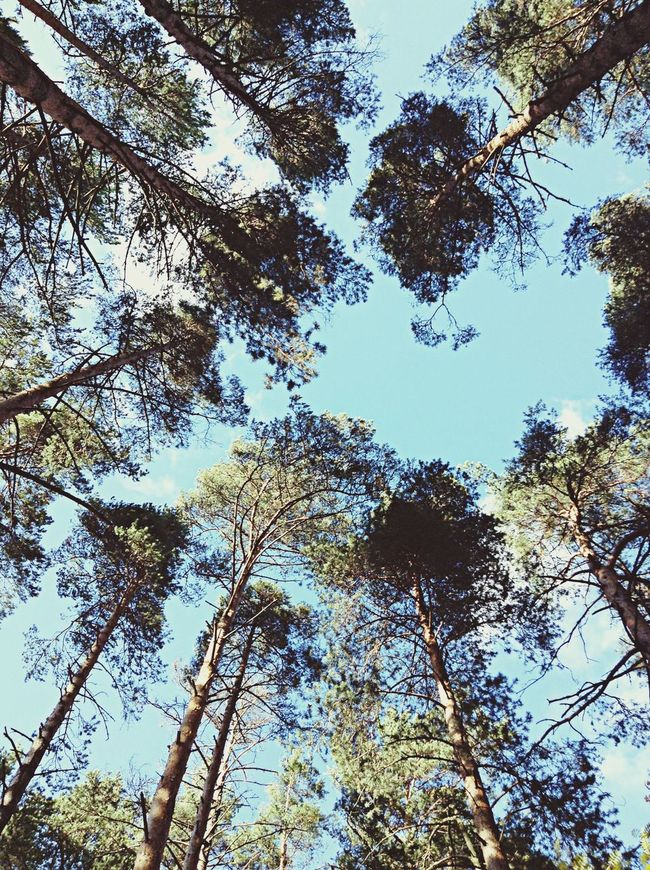 Skyforest] sky Trees Clouds