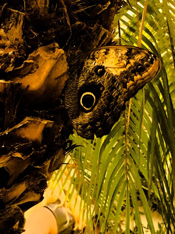 43 Golden Moments Butterfly ❤ Day Life Cycle No Care No People Creative Edit From My Point Of View Fine Art Close-up Wings Free Exhibition Creative Light And Shadow Taking Photo Welcomeweekly