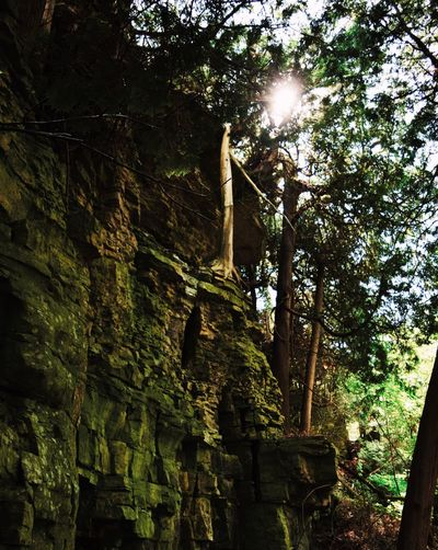 Shot from below. Sunbeam Low Angle View Sunlight History Tree Day No People Built Structure Spirituality Architecture Old Ruin Nature Ancient Civilization Outdoors Travel Destinations Beauty In Nature Sky Cliff EyeEm Best Shots EyeEmNewHere First Eyeem Photo