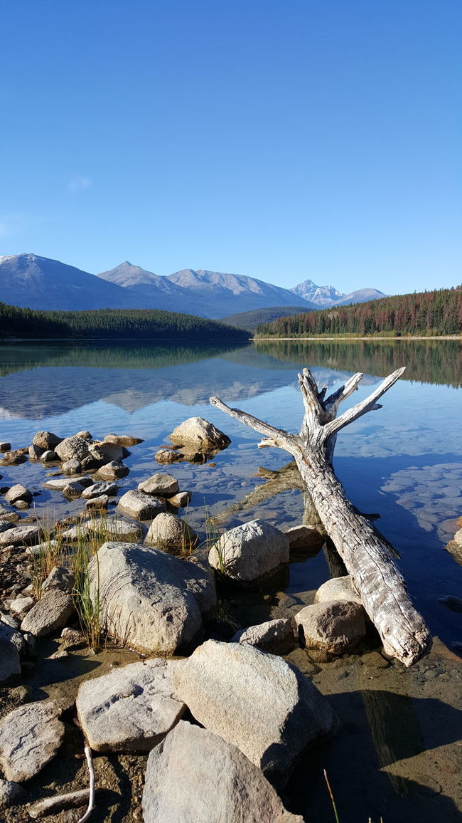 Mountain Water Tranquil Scene Clear Sky Scenics Blue Copy Space Tranquility Lake Mountain Range Travel Destinations Non-urban Scene Beauty In Nature Nature Lakeshore Driftwood Fallen Tree Geology Day Tourism Pyramid Lake Jasper Alberta Canada