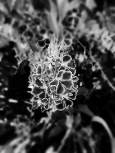 Brilliant Fragility Flower Plant Nature Beauty In Nature Flower Head Close-up Outdoors Blackandwhite Monochrome Artistic Blackandwhite Photography Landscape_Collection Abstract