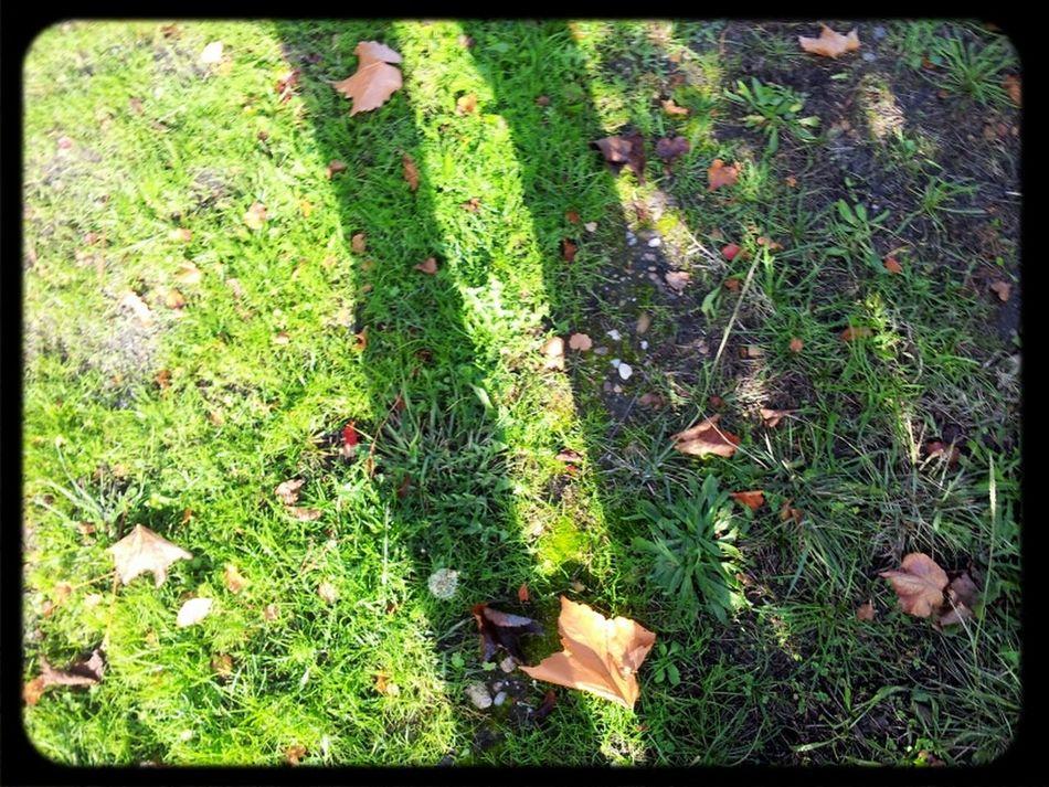 Shadow Autumn Autumn Leaves TheMinimals (less Edit Juxt Photography) Fall Leaves