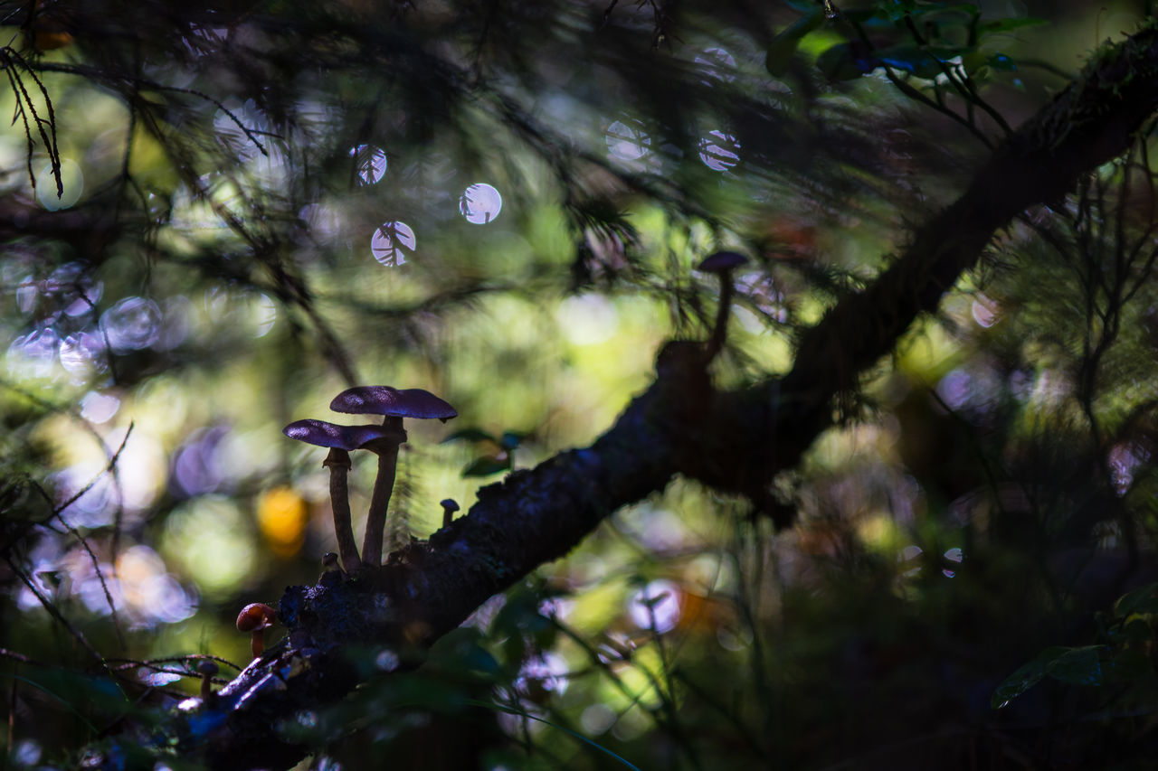 Autumn mushroom in Dalarna, Sweden Autumn Beauty In Nature Bokeh Bokeh Photography Branch Dalarna Dalecarlia Dark Day Forest Fragility Fungi Growth Mushroom Mushrooms Nature No People Northern Europe Outdoors Plant Scandinavia September Silhouette Sweden Tree
