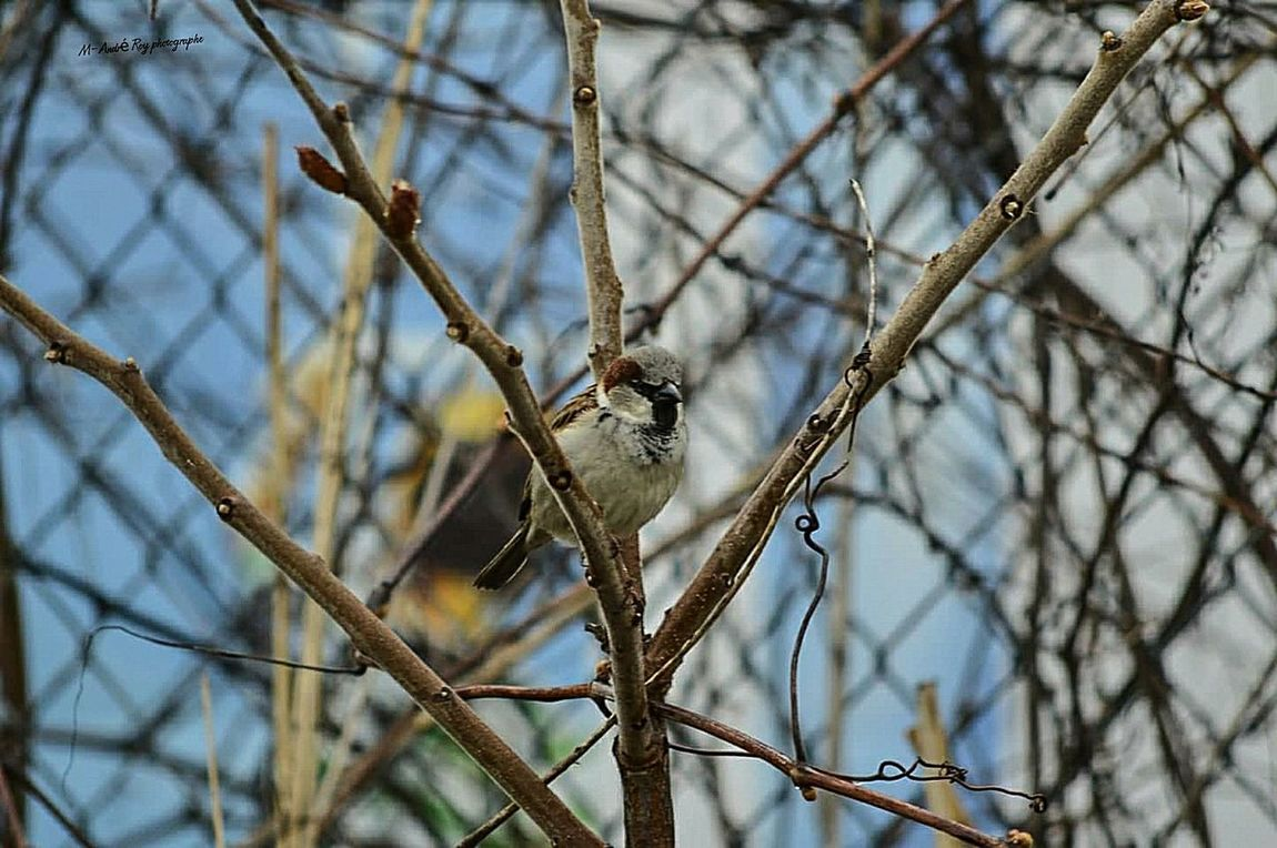 Bird Animal Wildlife Branch Animal Tree One Animal Animals In The Wild Nature Outdoors Day Perching Bare Tree Living Organism No People Animal Themes Beauty In Nature Mammal Mourning Dove Close-up Bird Of Prey