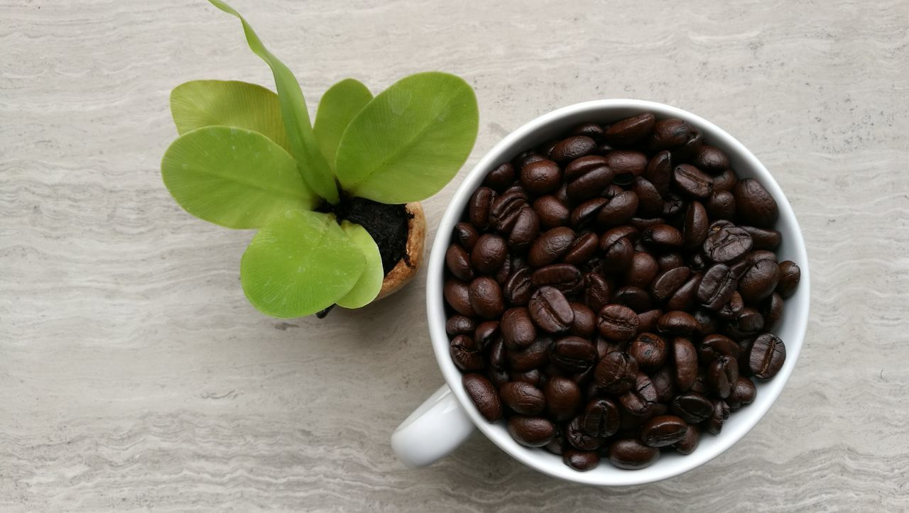 Seed Brown Coffee Beans Coffee Cup Drink Close-up Leaf Table Food Food And Drink Cute Plant Nature Coffee Coffee Time