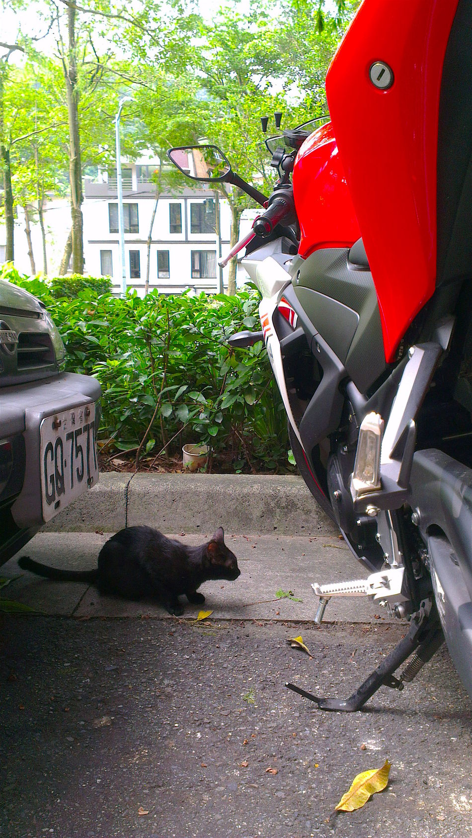 Alertness Black Cat Motorcycles Red Small Cat Sneak Watching The Street Photographer - 2016 EyeEm Awards