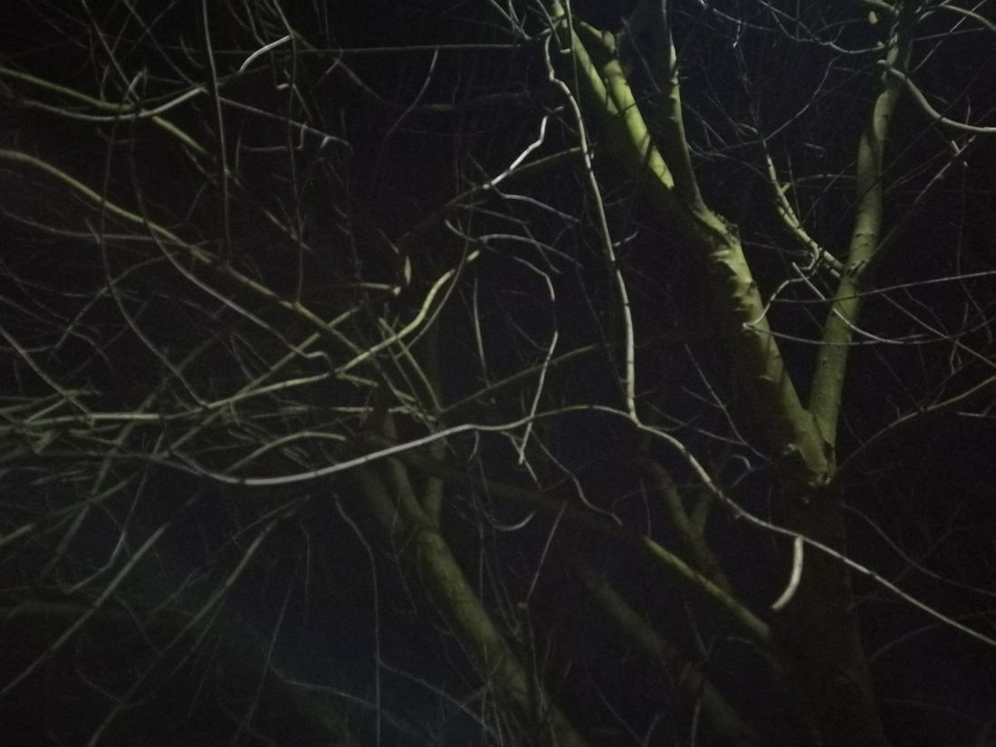 Nature Full Frame No People Backgrounds Tree Branch Beauty In Nature Close-up Outdoors Night Sky Astronomy Scary Movie Scarymovie  Scary Tree/March 2017,London/ The Secret Spaces