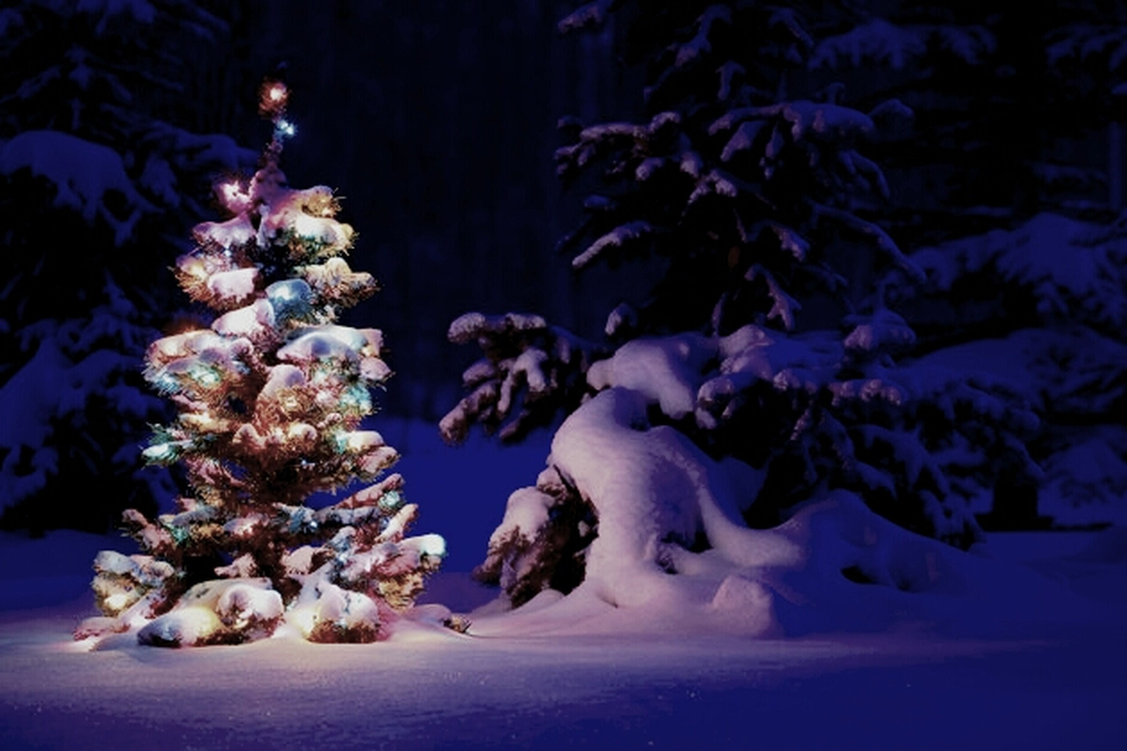 winter, cold temperature, snow, night, beauty in nature, nature, season, frozen, blue, white color, tranquility, no people, illuminated, close-up, growth, covering, flower, outdoors, copy space, weather