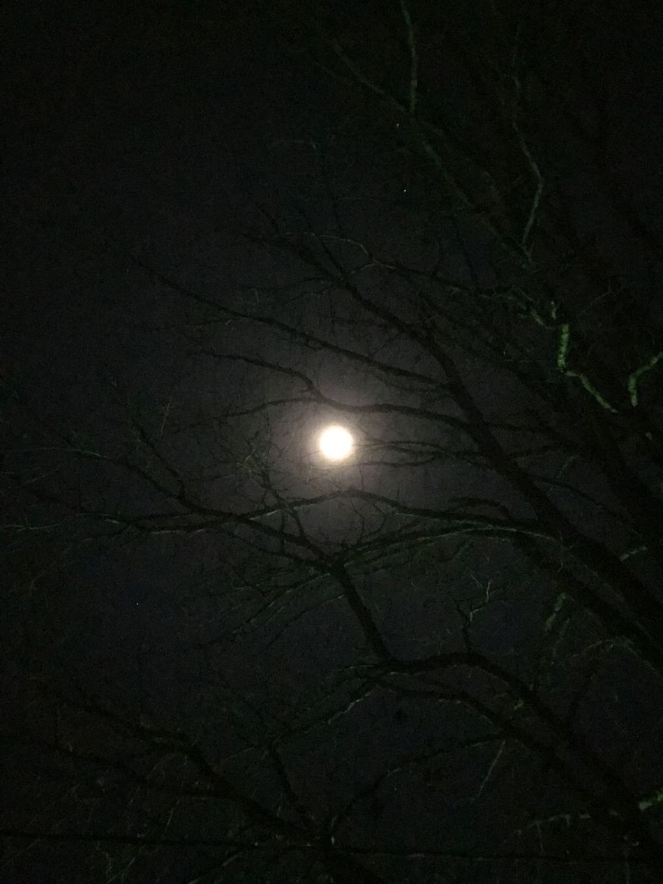 Moonlight Moon Nature Tranquility Tranquil Scene Sky Branch Outdoors Astronomy Beauty In Nature Bare Tree Leafless Leaflesstree Leafless Tree Under A Bright Moonlight Moon Lover Nightphotography Moon Shots Tranquility Beauty Of The Night