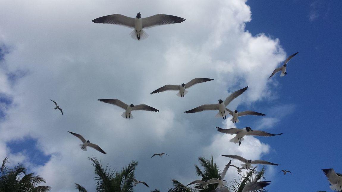 Culebra Puerto Rico flamenco Aves Birds