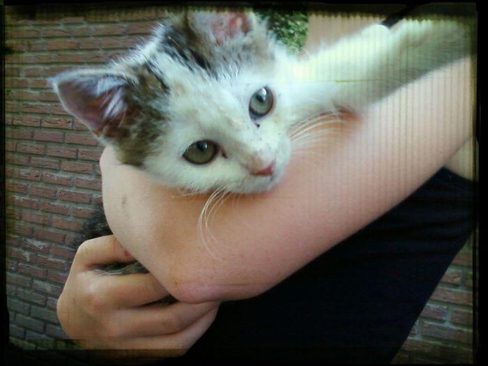 Captain Cute Pets Cat♡